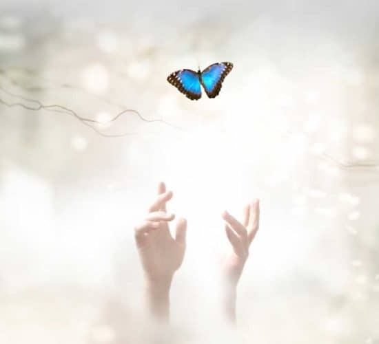 Hands reaching butterfly